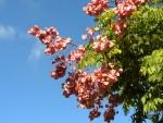 árvore-camarão (4)