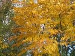 árvore-camarão (9)