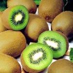 kiwi (92)