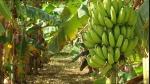 banana (07)
