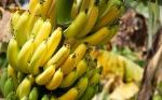 banana (09)