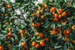 tangerina (01)