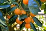 tangerina (02)