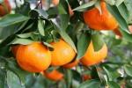 tangerina (03)