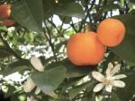 tangerina (04)
