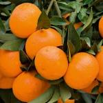 tangerina (05)