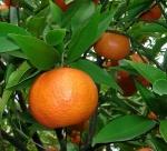 tangerina (06)