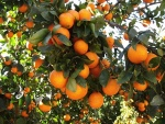 tangerina (08)