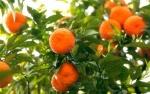 tangerina (90)