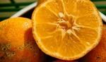 limão-cravo (8)