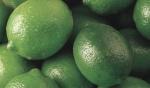 limão-tahiti (7)