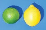 limão-tahiti x limão-siciliano