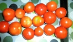 tomate (07)