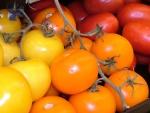 tomate (91)