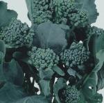 brócolis (02)