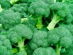 brócolis (07)