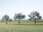 palmeira-azul (07)