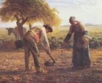 Plantadores de Batatas