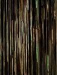 Floresta Crepuscular