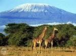 Kilimanjaro (02)