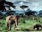 Kilimanjaro (03)