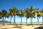 coqueiro - Cocos nucifera (01)