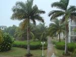palmeira-real-cubana (03)