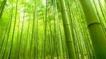 bambu (02)