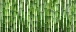 bambu (04)