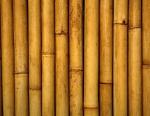 bambu (05)